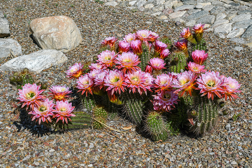 Spring Flowers-3027-72.jpg