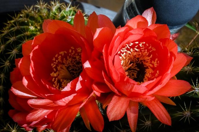 Spring Flowers-3031-7-72