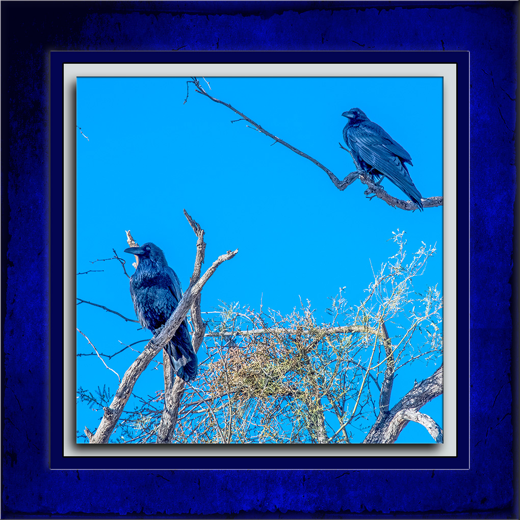 A Pair of Ravens-72