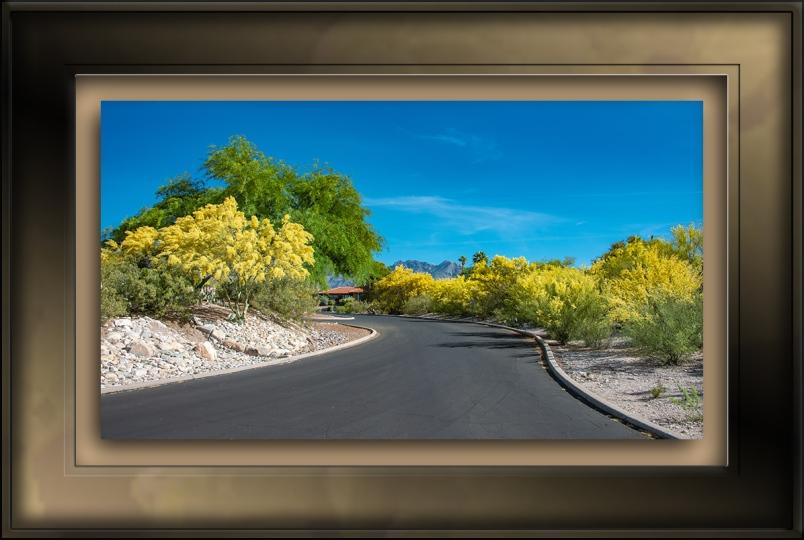Palo Verde Trees-3852-72