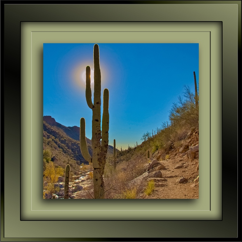 Saguaro-21-72