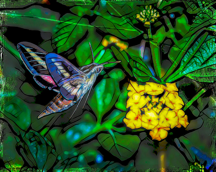 White-lined Sphinx Moth-Art-72