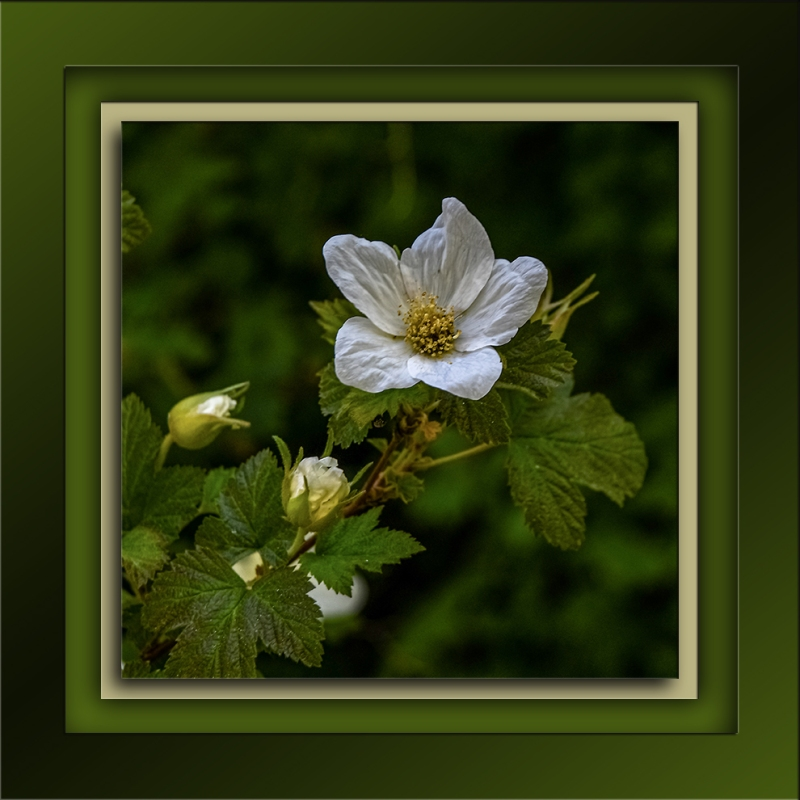 New Mexico Raspberry Blossom-72-2