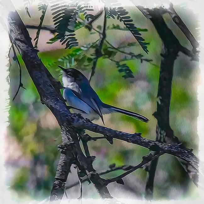 Bluebird-art-2-72
