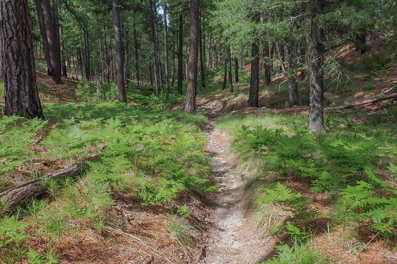 Box Camp Hike-5-72
