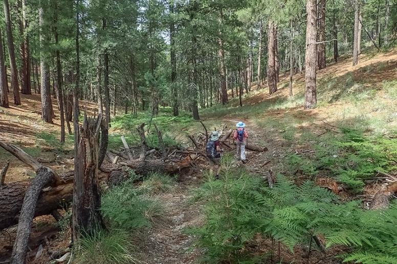 Box Camp Hike-6-72