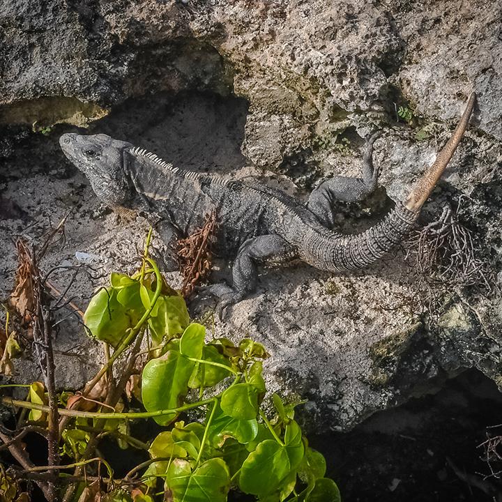 Lizards-5-72