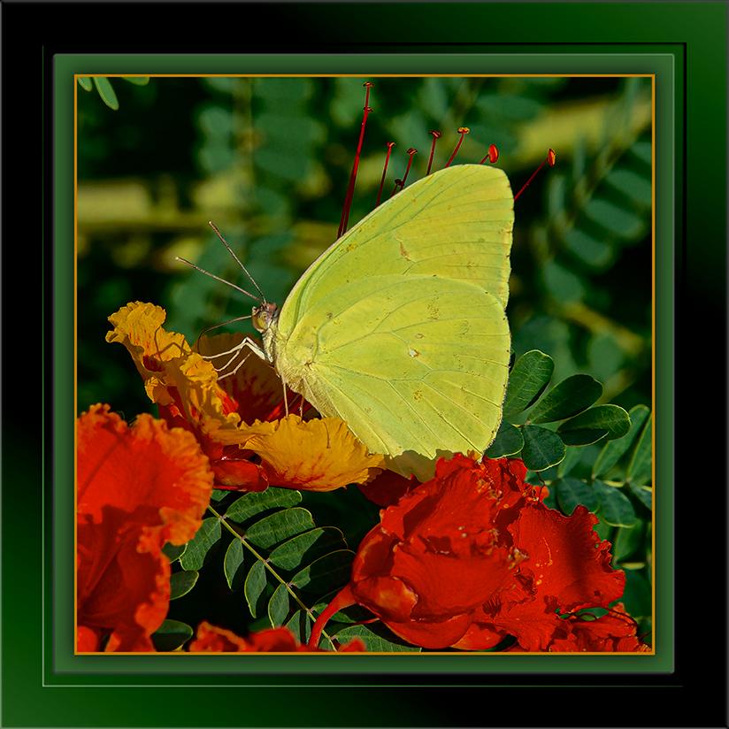 SCVN Nature Walk 08-15-12, Marshall Gulch