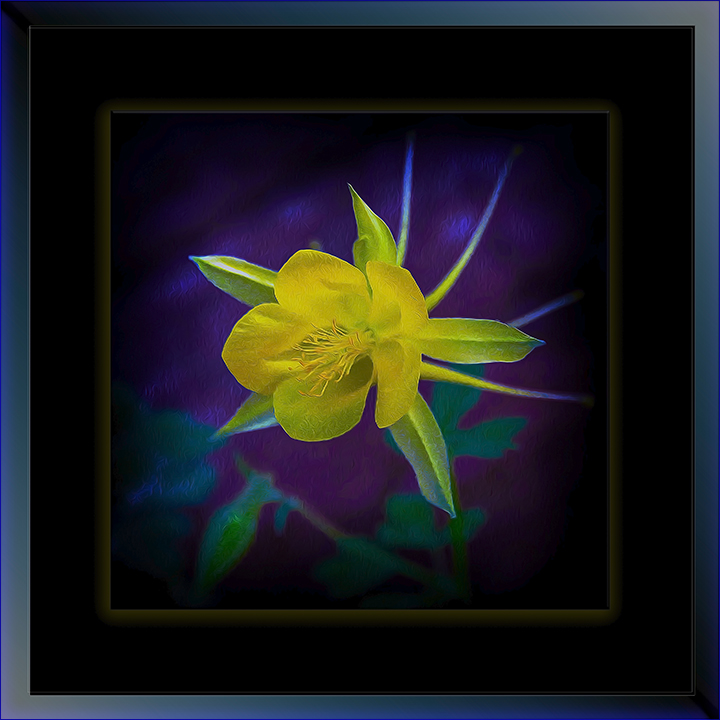 Golden columbine (1 of 1) art_II-72