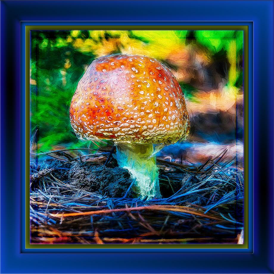 Mushroom-art-II-72.jpg