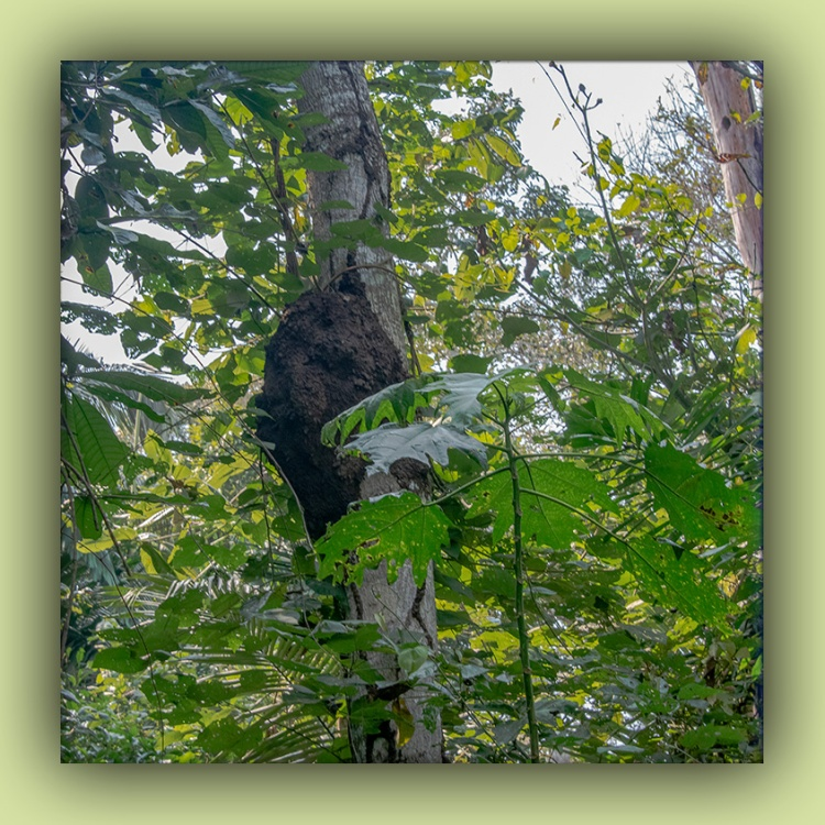 Termit Nest-2-72.jpg