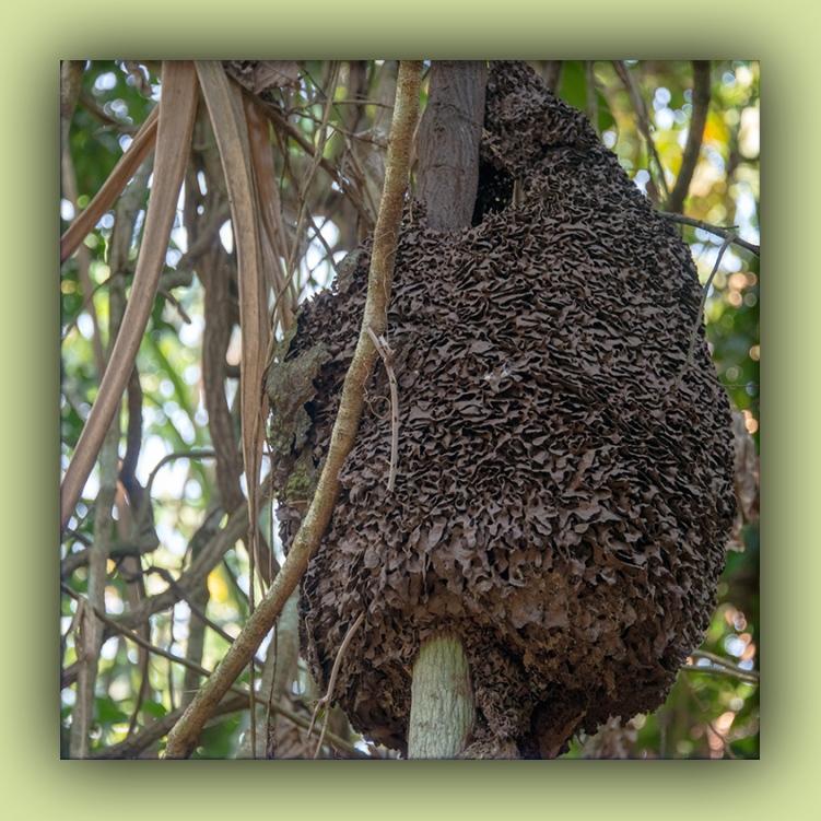 Termit Nest-72.jpg