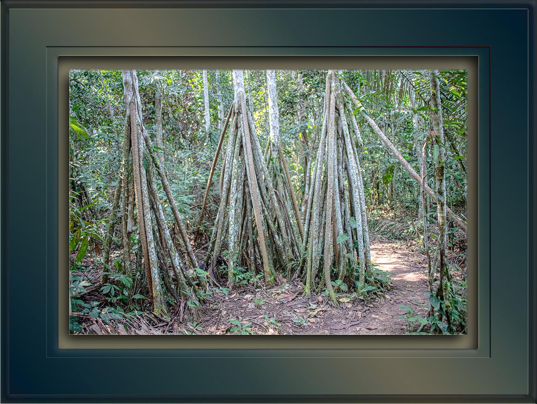 Walking Tree-72.jpg