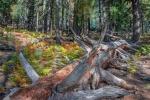 Aspen Trail-10-72