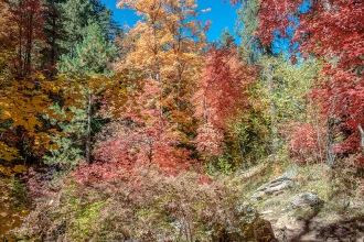Aspen Trail-12-72
