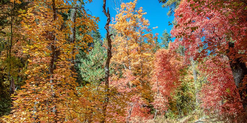 Aspen Trail-13-2-72
