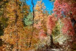 Aspen Trail-13-72