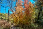 Aspen Trail-14-72