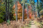 Aspen Trail-15-72