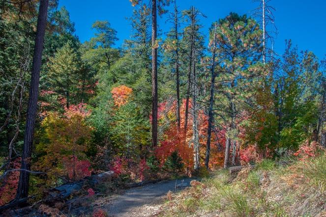 Aspen Trail-17-72