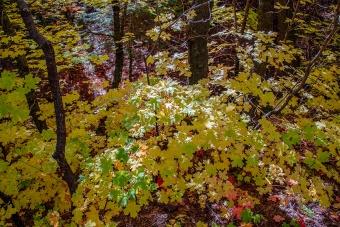 Aspen Trail-18-72