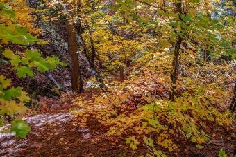 Aspen Trail-19-72
