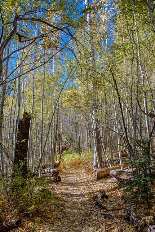Aspen Trail-2-72
