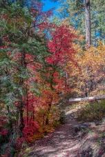 Aspen Trail-20-72