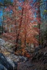 Aspen Trail-22-72
