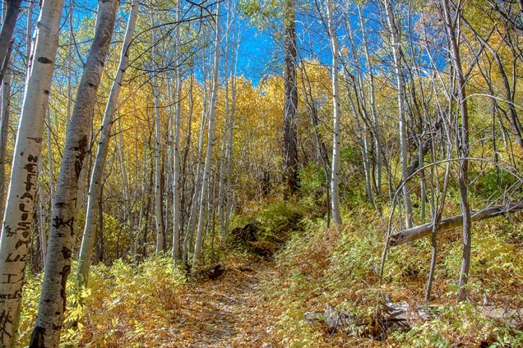 Aspen Trail-3-72