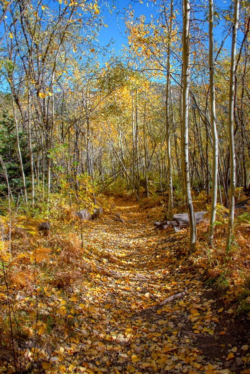 Aspen Trail-6-72