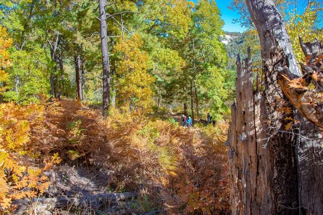 Aspen Trail-8-72