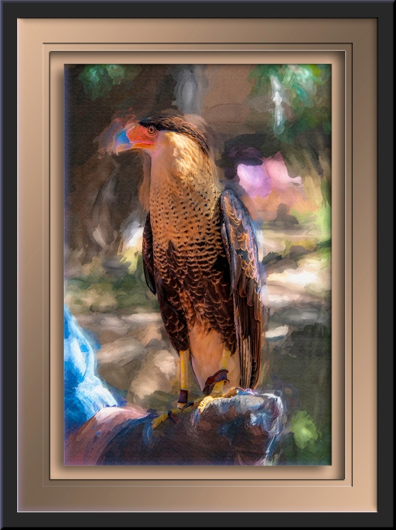 Crested Caracaras-art-72-2.jpg