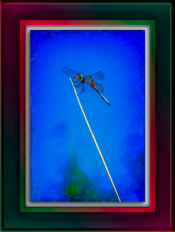dragonfly (1 of 1)-3-Edit-1-art-II-72