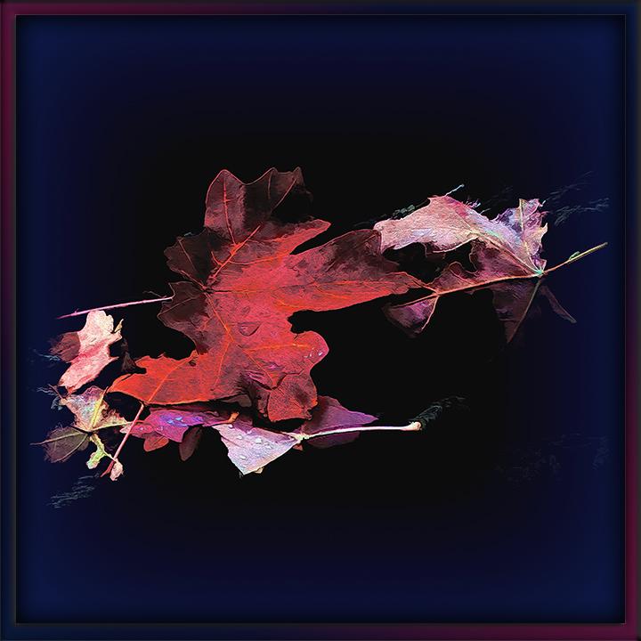 Fall Leaves Art-II-2-72