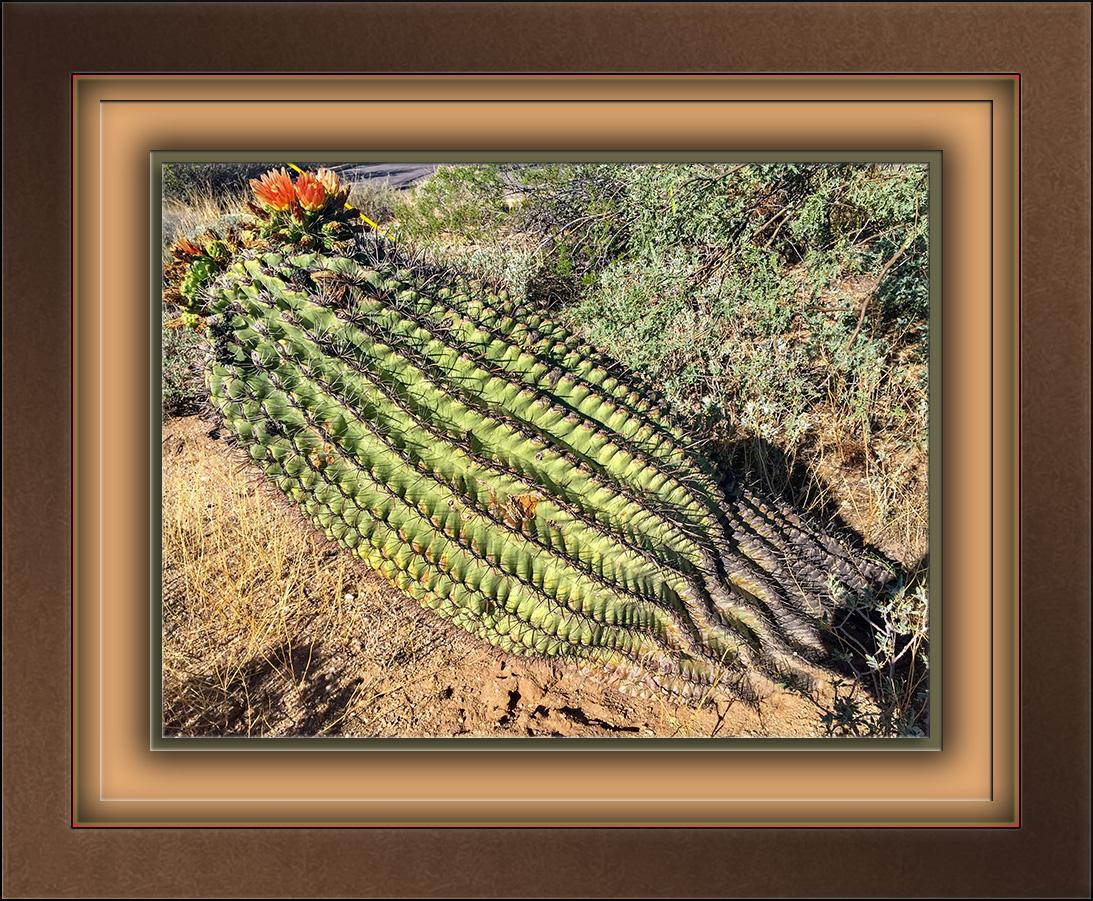 Fallen Barrel Cactus-72.jpg