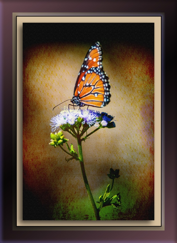 Ken & Mary Visit -- Monarch-2-art-72