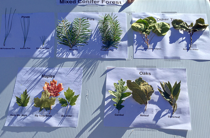 Mixedd Conifer Displayboard-72.jpg