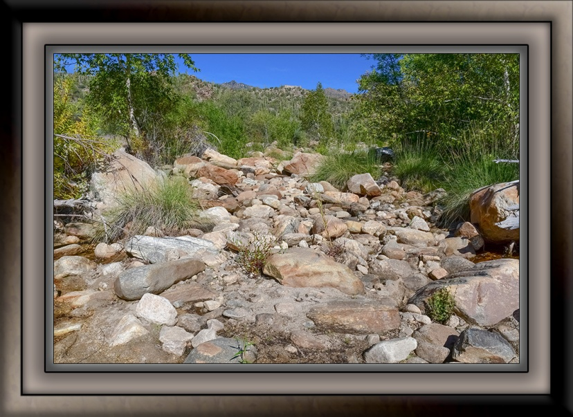 Thursday Elementary-11 -Sabino Creek