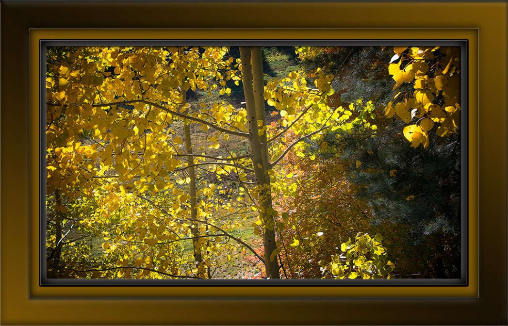 Aspen Draw Fall Colors-8406-72.jpg