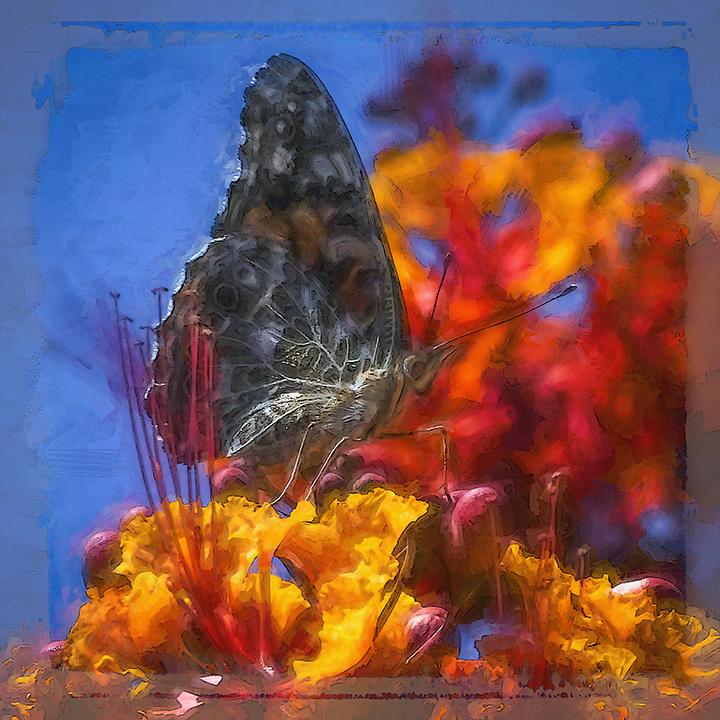 Butterfly-art-72.jpg