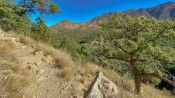 Madera Canyon-11-72