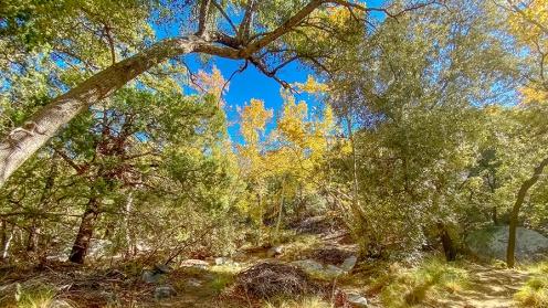 Madera Canyon-13-72