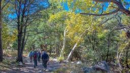 Madera Canyon-4-72