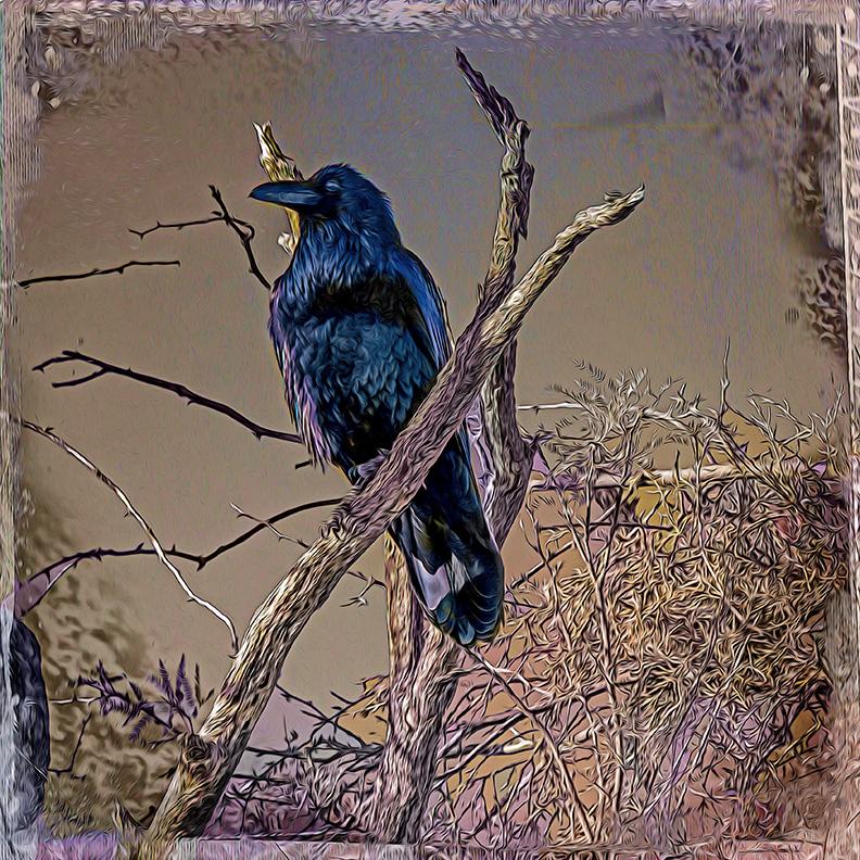 Raven-0470-art-2-72.jpg