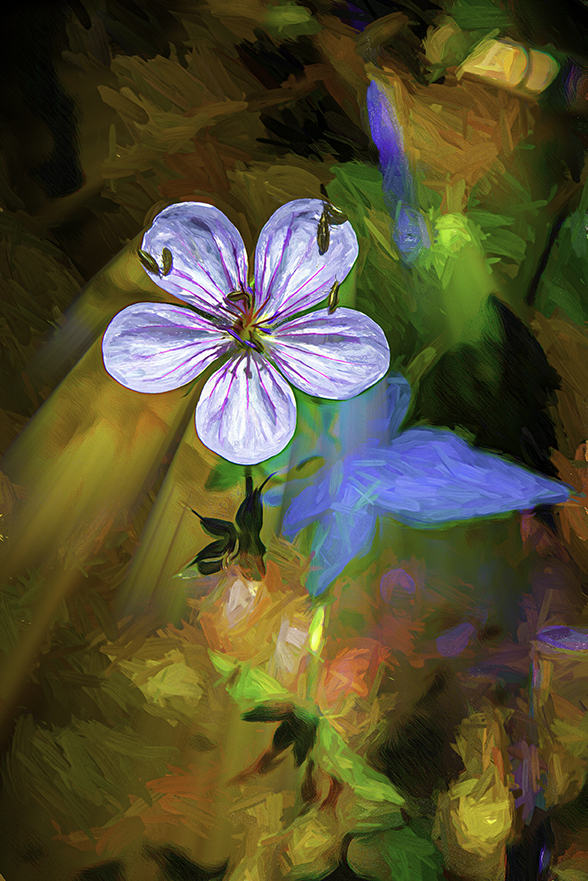 Richardson's geranium (1 of 1) art-Edit-3-art-72.jpg