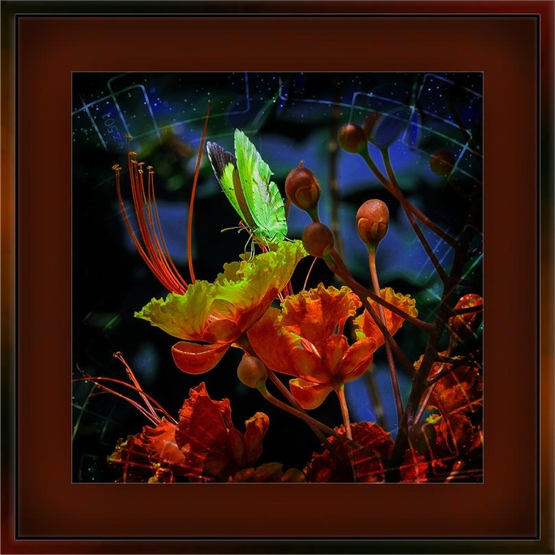 Yard flowers (1 of 1)-2 butterfly art blog