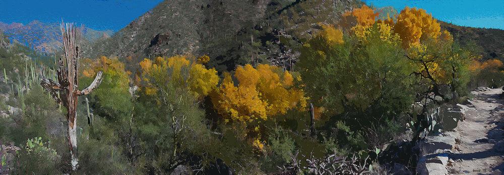 Sabino Creek Colors_Panorama1_art blog