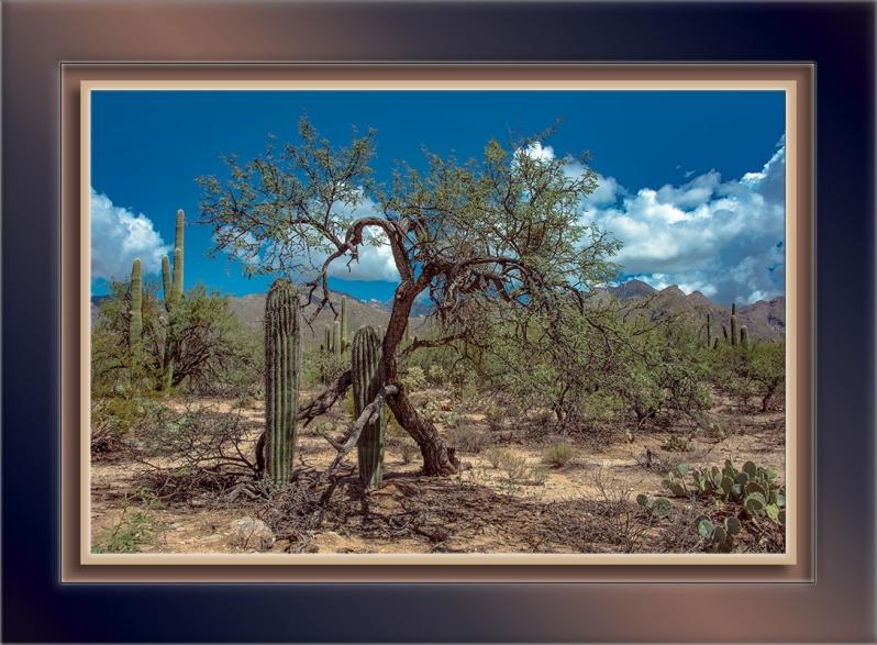 Bluff Trail (1 of 1)-5-Nurse Tree-72