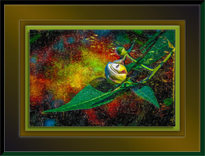 Desert Cotton Blossom-art-72.jpg